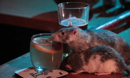 https://us.avalanches.com/san_francisco_want_to_get_drunk_and_play_with_rats_san_franciscos_got_your_bait6024_14_10_2019