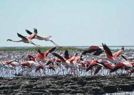 https://uz.avalanches.com/nukus_flamingolar_yana_ozbekistonda9357_02_11_2019